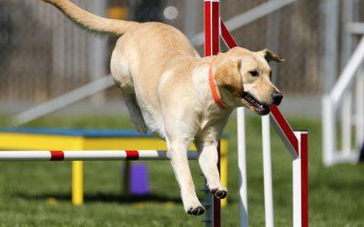 2 sports à pratiquer avec votre chien